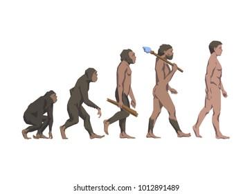 Vector illustration of evolution