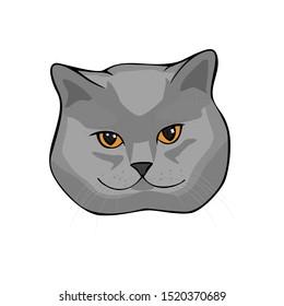 Vector illustration face of  gray shorthair scottish cat. Isolated on white background.