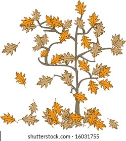 Vector illustration of Fall or Autumn red Oak leaves falling off the tree