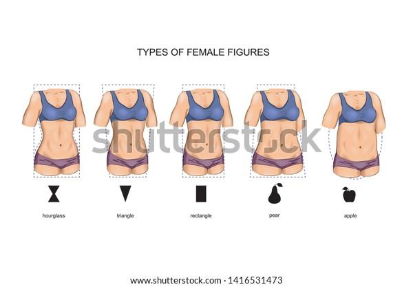 vector illustration of female figure types. sport