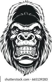 Vector illustration, ferocious gorilla head on white background