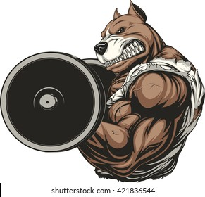 Vector illustration of a ferocious pitbull raises the barbell on biceps
