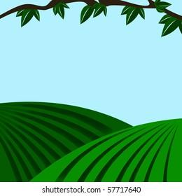 vector illustration fields on the hills