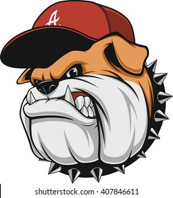 Vector illustration, a fierce bulldog wearing a cap baseball cap, against a white background