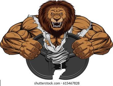 Vector illustration of a fierce strong lion bodybuilder breaks iron, over white background