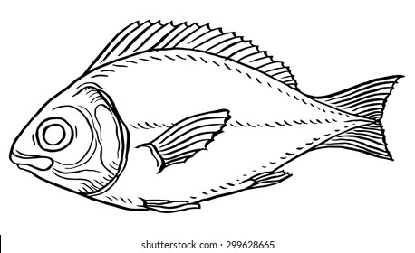 Vector illustration fish - sea or river fish for stamps and labels