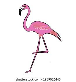 Vector illustration of flamingo bird isolated on white background
