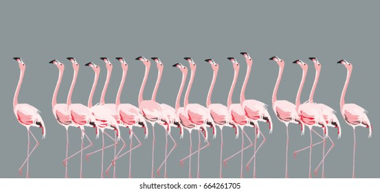 Vector illustration with flamingo flock on grey background.