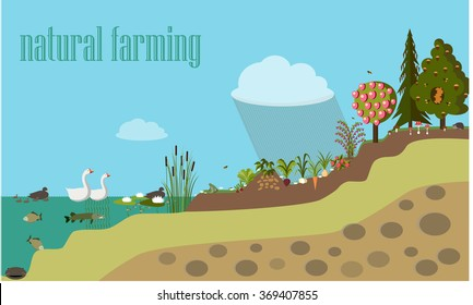 vector illustration, flat, natural farming smarter,  info-graphics