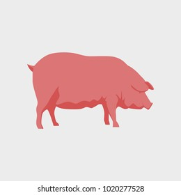 Vector illustration in flat style pig