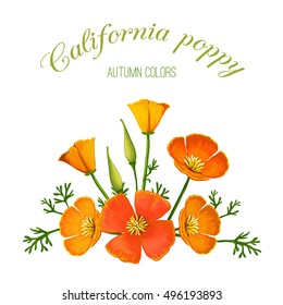 Vector illustration of flower arrangement. California poppy. Made in a realistic style.
