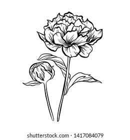 Vector illustration with flower. Black and white flovers.
