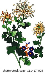 Vector illustration of flower chrysanthemum