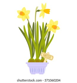 Vector illustration with flower pot in flat style. Vector narcissus isolated on white background