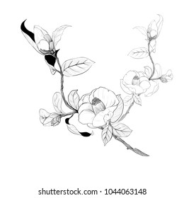 Vector illustration. Flowers, buds and leaves - a branch of camellia on a white background. Perfumery and cosmetic plants. Wallpaper. Use printed materials, signs, posters, postcards, packaging.
