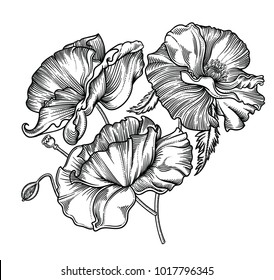 Vector illustration of flowers and leaves.Very detailed flowers in sketch style.Elegant floral decoration  for design.Elements of composition are separated in each group. Isolated on white background