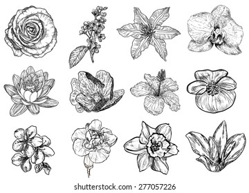 Vector illustration of flowers in sketch style: rose, bird cherry tree, lilac, clematis, orchid, lily, water-lily, lotus, hibiscus, violet, apricot, almond, cherry, carnation, narcissus, magnolia