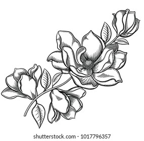 Vector illustration of flowers.Detailed apple blossom in black and white sketch style. Elegant floral decoration for design.Elements of composition are separated in each group. Isolated on white