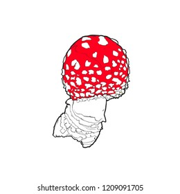 Vector illustration - Fly agaric isolated on white background