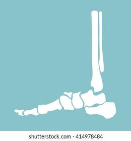 Vector illustration foot bone anatomy side view. Orthopedic flat icon. Diagnostic center