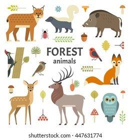 Vector illustration of forest animals: elk, doe, hedgehog, fox, owl, lynx, skunk, wild boar, woodpeckers and other birds, isolated on transparent background.