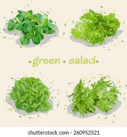 vector illustration four beams of green leafy lettuce