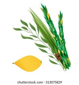 Vector illustration of four species - palm, willow, myrtle , lemon - symbols of Jewish holiday Sukkot. Holiday   illustration.