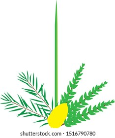 A vector illustration of the four species that Orthodox Jews take on Sukkot on Tishrei month. Ethrog, lulav, myrtle, willow.