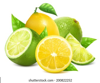 Vector illustration. Fresh lemons and limes with leaves.