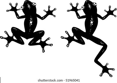 Vector illustration of a frog. Black and white.