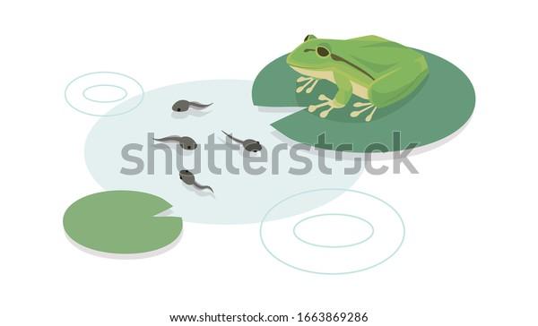 ベクターイラスト カエルとオタマジャク