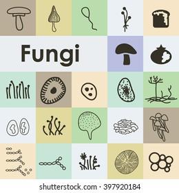 vector illustration / fungi icons set