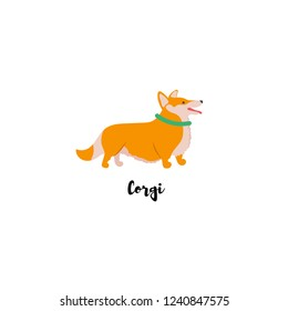 Vector illustration. Funny cartoon style icon of Welsh Corgi Cardigan for different design with text. Cute family dog.