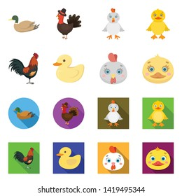 Vector illustration of funny and poultry symbol. Set of funny and farming stock symbol for web.