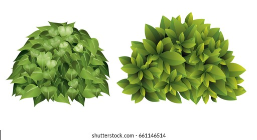 Vector illustration of garden bush with green leaves in cartoon style.