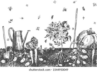 Vector illustration of garden patch of vegetables. Carrot, tomatoes, potatoes, pumpkin. Shovel, trowel and watering can. Autumn farm harvest. Vintage hand drawn style.