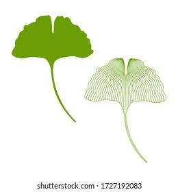 Vector illustration of a ginkgo biloba leaf on a white isolated background. Vector set ginkgo biloba