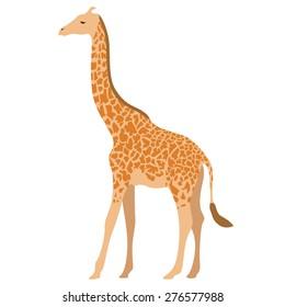 vector illustration of giraffe