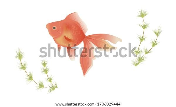 ベクターイラスト 金魚と水生植物