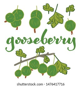 vector illustration of gooseberry and leaf design isolated with lettering gooseberry background white and berry EPS10