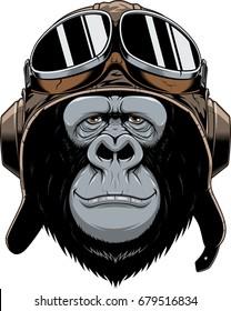 Vector illustration, a gorilla head in a pilot's helmet, on white background