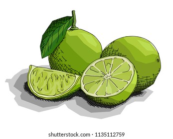 Vector illustration graphic arts sketch of drawing fruit limes with half.
