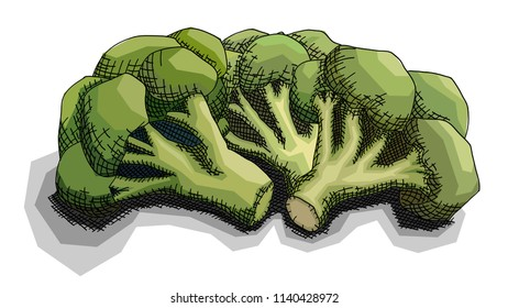 Vector illustration graphic arts sketch of drawing bunch of broccoli.