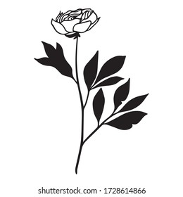 vector illustration of graphic design of rose, icon, art sketch sketch, logo, blooming bud, flower branch, use in print, hand draw