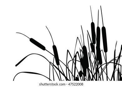 Vector illustration of grass-like cattails over white