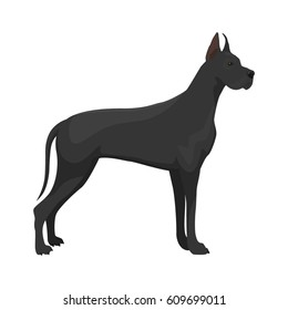 Vector illustration of Great Dane standing on white background.