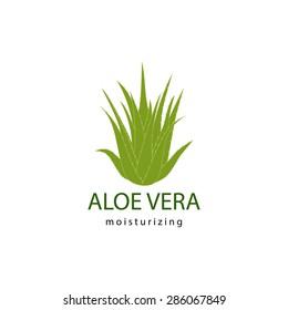 vector illustration of green aloe vera plant
