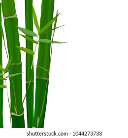 Vector illustration with green bamboo stems