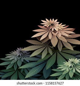 Vector illustration of green cannabis bush isolated on black background