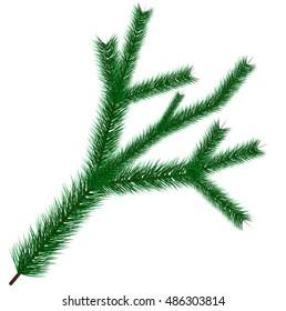 Vector illustration of green christmas tree branche